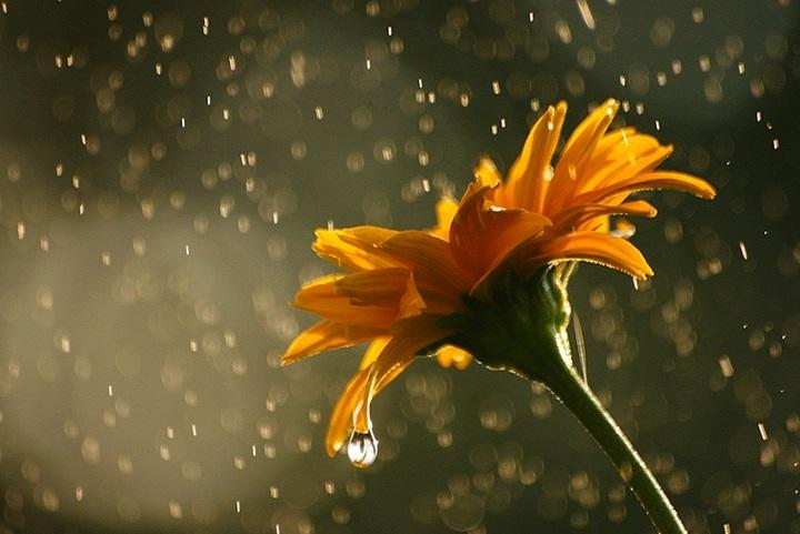 Flowers In Rainy Season Nice Photos