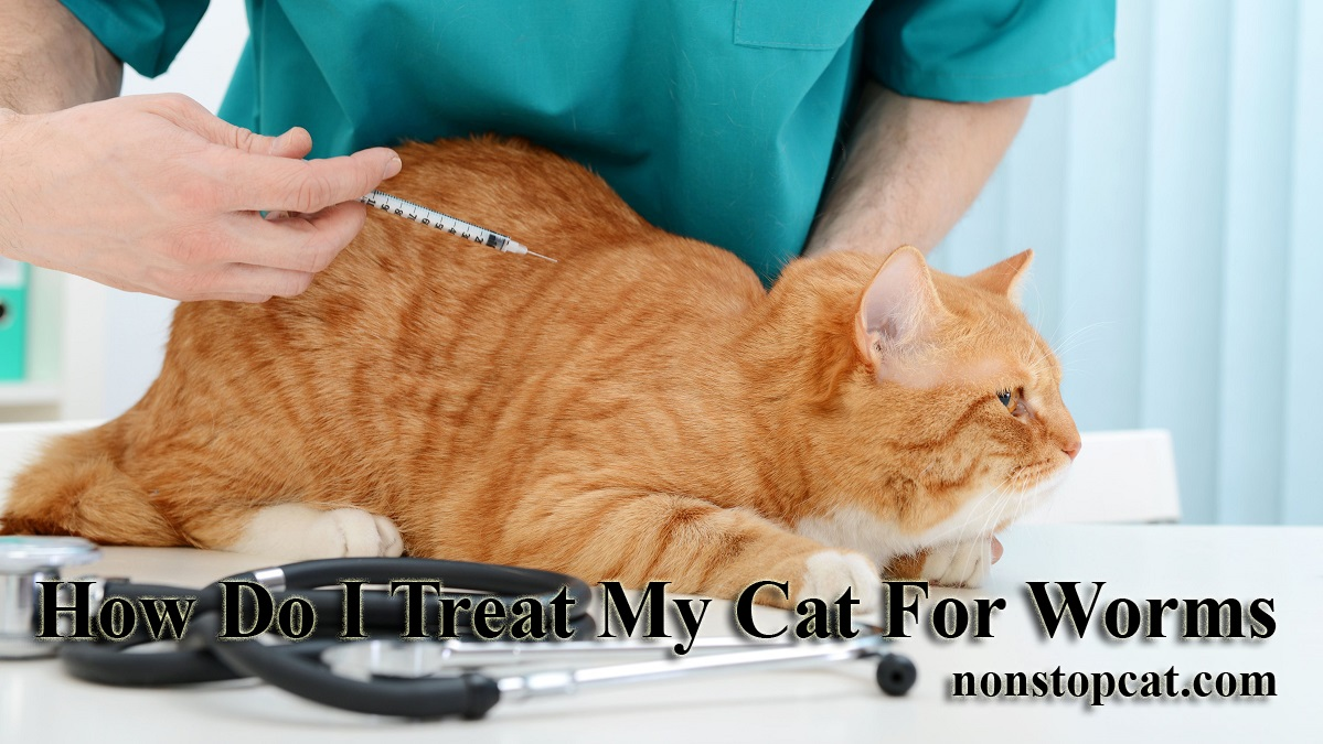 How Do I Treat My Cat For Worms