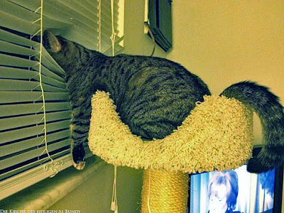 Faule Katze schaut aus dem Fenster lustig