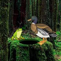 Games2rule - Temperate Rainforest Escape