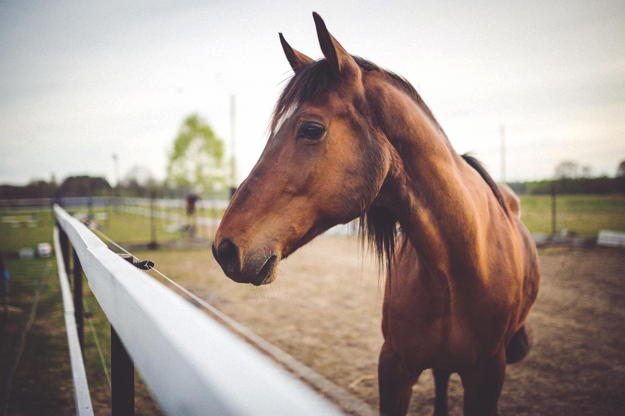 hors sex Katsina Police on patrol arrest okada man for having sex with horse at Polo  Ground