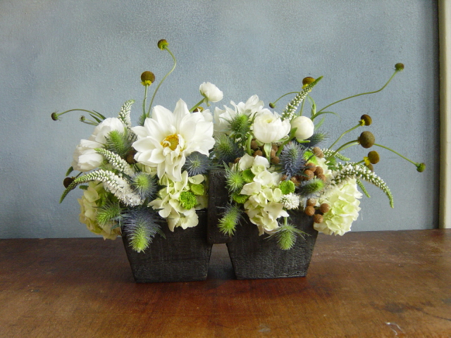 Live Potted Plants Centerpieces