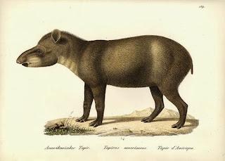 https://bio-orbis.blogspot.com.br/2014/01/jose-de-anchieta-e-biodiversidade.html