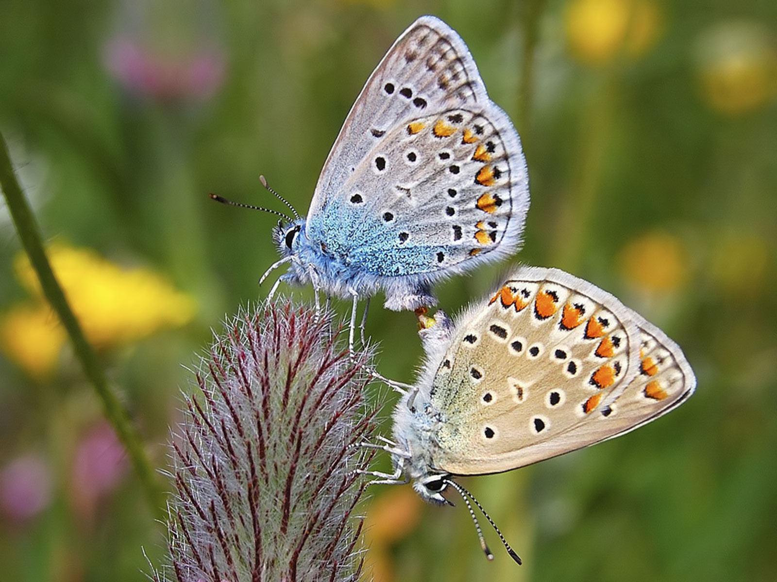 Cute Coffee Mugs Beautiful Butterfly Picutres Cini Clips