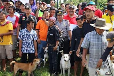 Wawako Pariaman Mardison Mahyuddin, Buka Even Wisata Buru Babi di Desa Padang Cakua