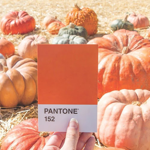 Pantone Pumpkin Patch on Instagram: Katelyn Wood from LLK-C