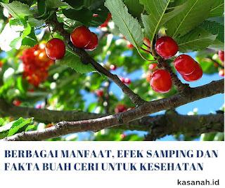 Pohon buah ceri