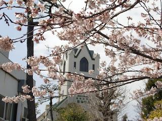 日本基督教団の桜