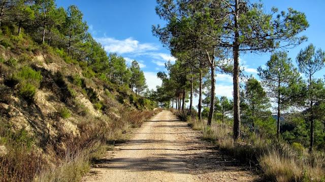 Camí del Cocó. Barranc de Malafí