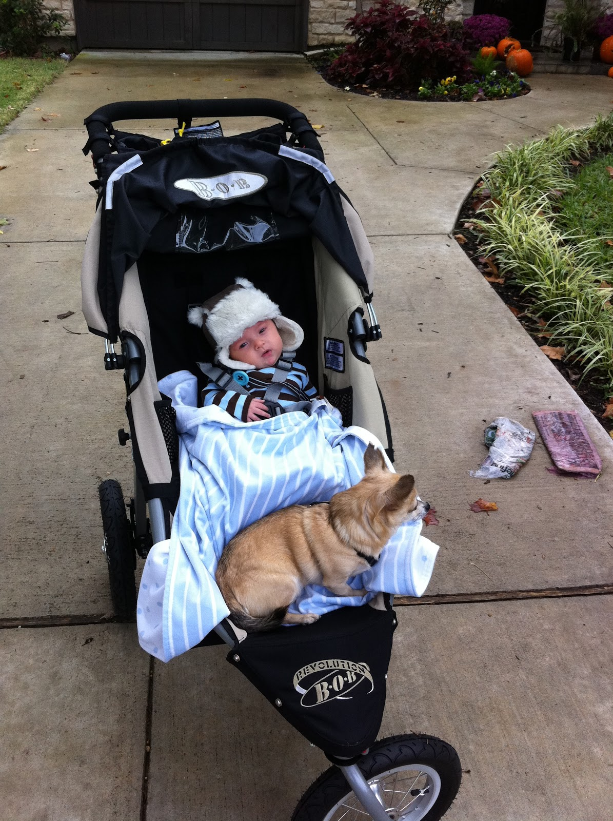 Daily Dimples: The Double Stroller