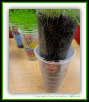 Science and Seeds in Kindergarten via RainbowsWithinReach