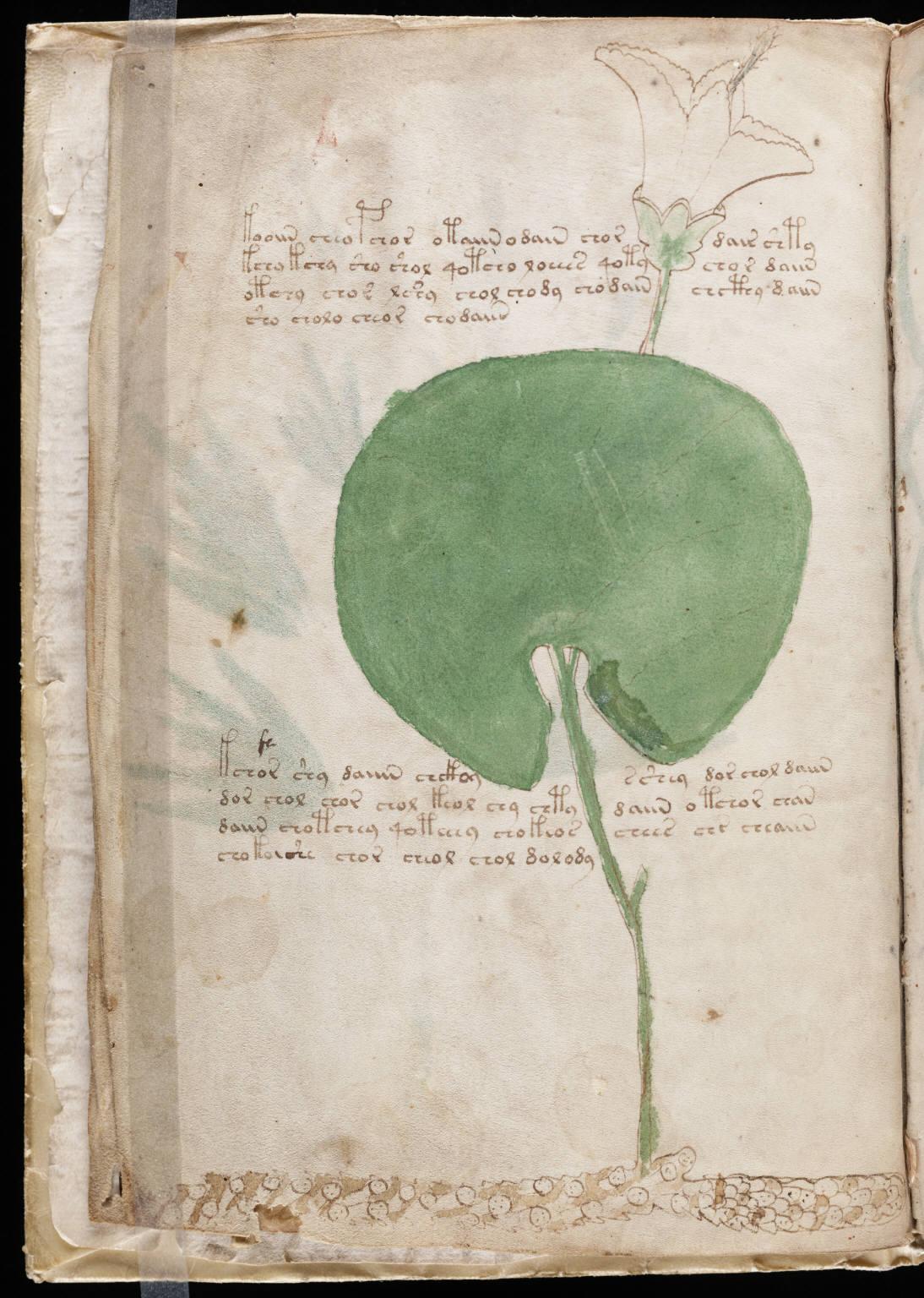 manuscrito006