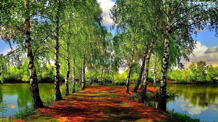 manzara resimleri gölün içinde ağaç fotoğrafları
