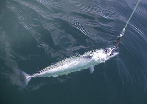 Homemade fishing lure blog 2011 for Fishing tackle tester