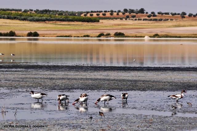 Resultado de imagen de Laguna de El Longar