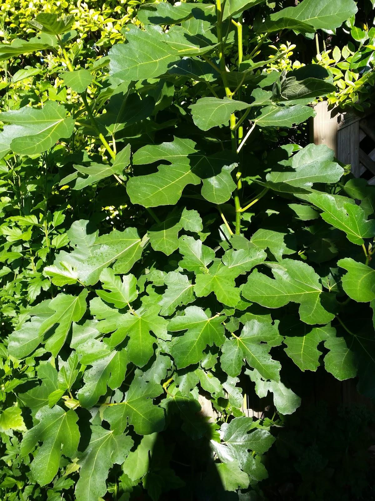 Ich Dünge Meine Pflanzen Regelmäßig Und Pflege Sie, Trotzdem Kommt Es In  Regelmäßigen Abständen Auch Zu Schädlingsbefall.