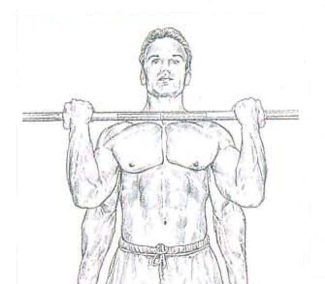 ejecución del curl de bíceps con barra | Rane Forti
