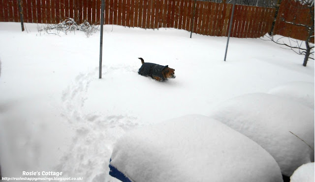 "Siberian winds & snow storms, named ""the beast from the east"" by the media, hits the UK - even more snow arrived and our furbaby Jade braves the elements in her garden."