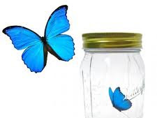 Kado Unik, Butterfly In Jar