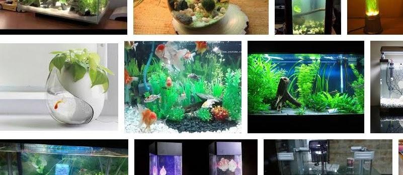 Hiasan Aquarium Unik dan Keren Sekarang Ini