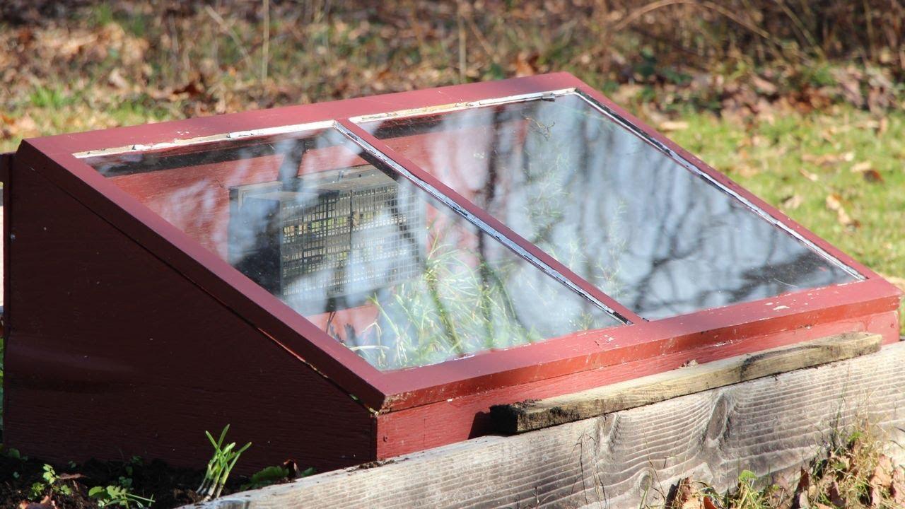 windsor essex county community garden collective news blog