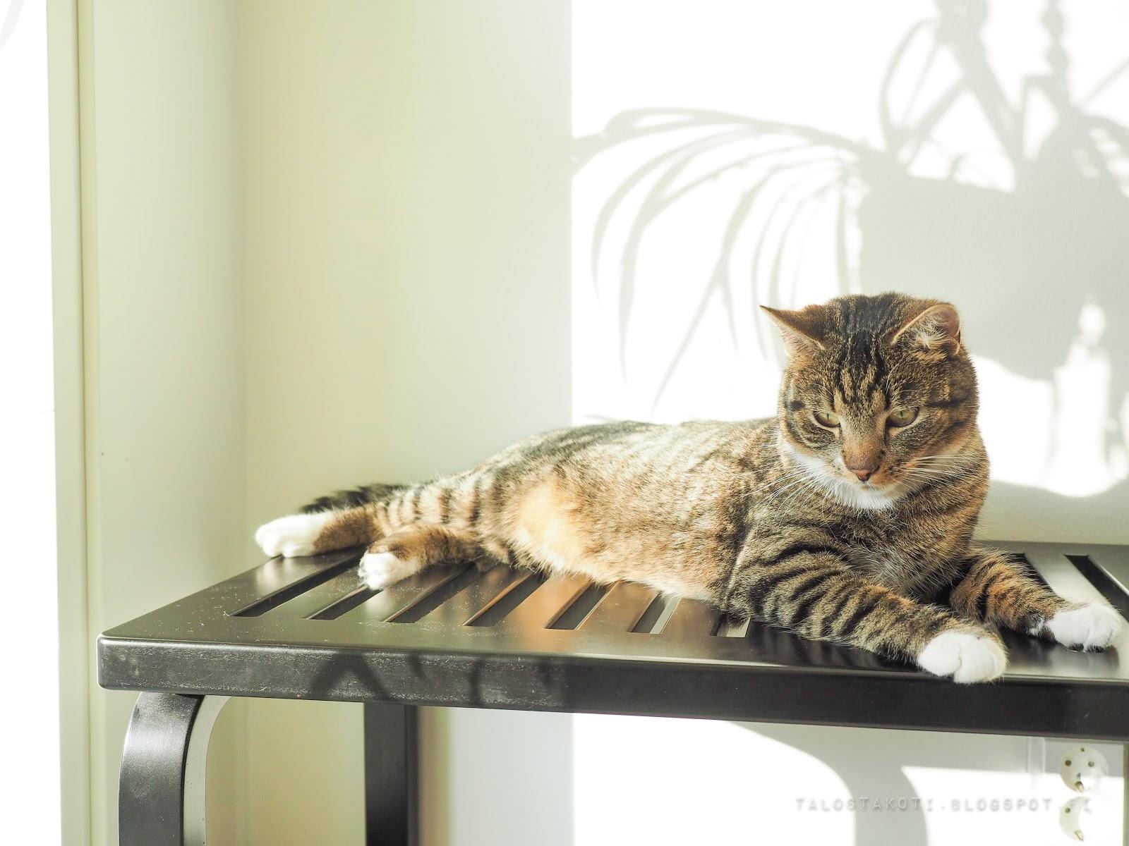kissa, artek ritiläpenkki