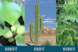 Pengertian Tumbuhan Hidrofit, Xerofit, Higrofit, Halofit dan Mesofit