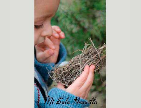 44e4ab017e5e20 Las aves se encuentran comúnmente en todos los ámbitos y en todas las  comunidades. Cuando animamos a los niños a observar acerca de las aves que  hay en su ...