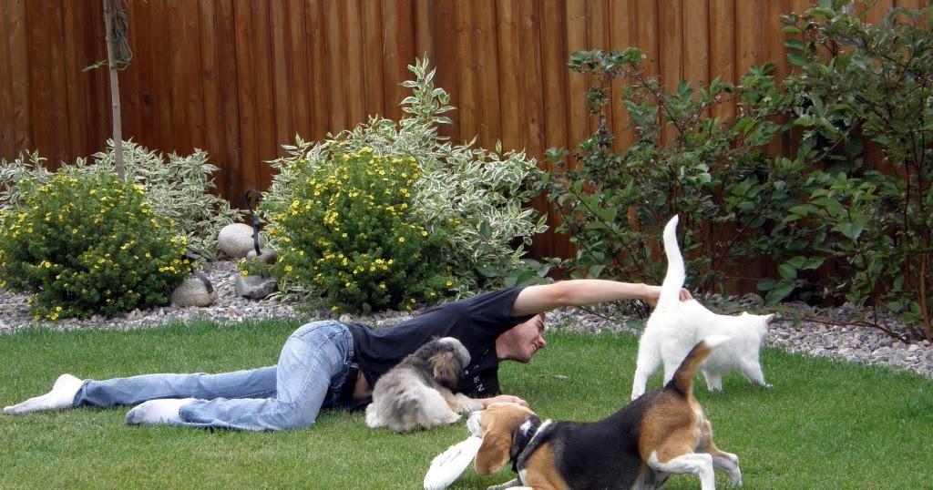 Comportamiento Animal Cómo Hacer Que Mi Perro Acepte A Mi Gato O Mi Gato Acepte A Mi Perro O Como Hacer Para Que Todos Mis Animales Se Lleven Bien