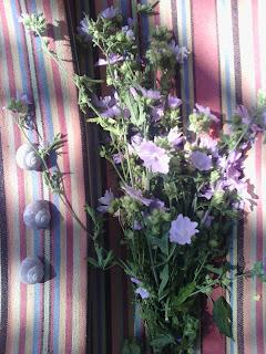 bagno, erba, fiori, infuso, magia, malva, negatività