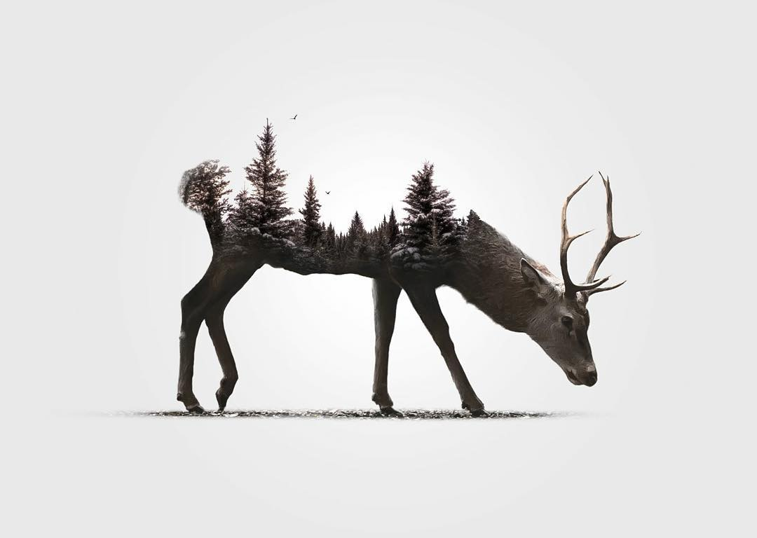 13-Deer-Alexis-Nevess-nevessart-Photographic-Double-Exposures-of-people-and-Animals-www-designstack-co