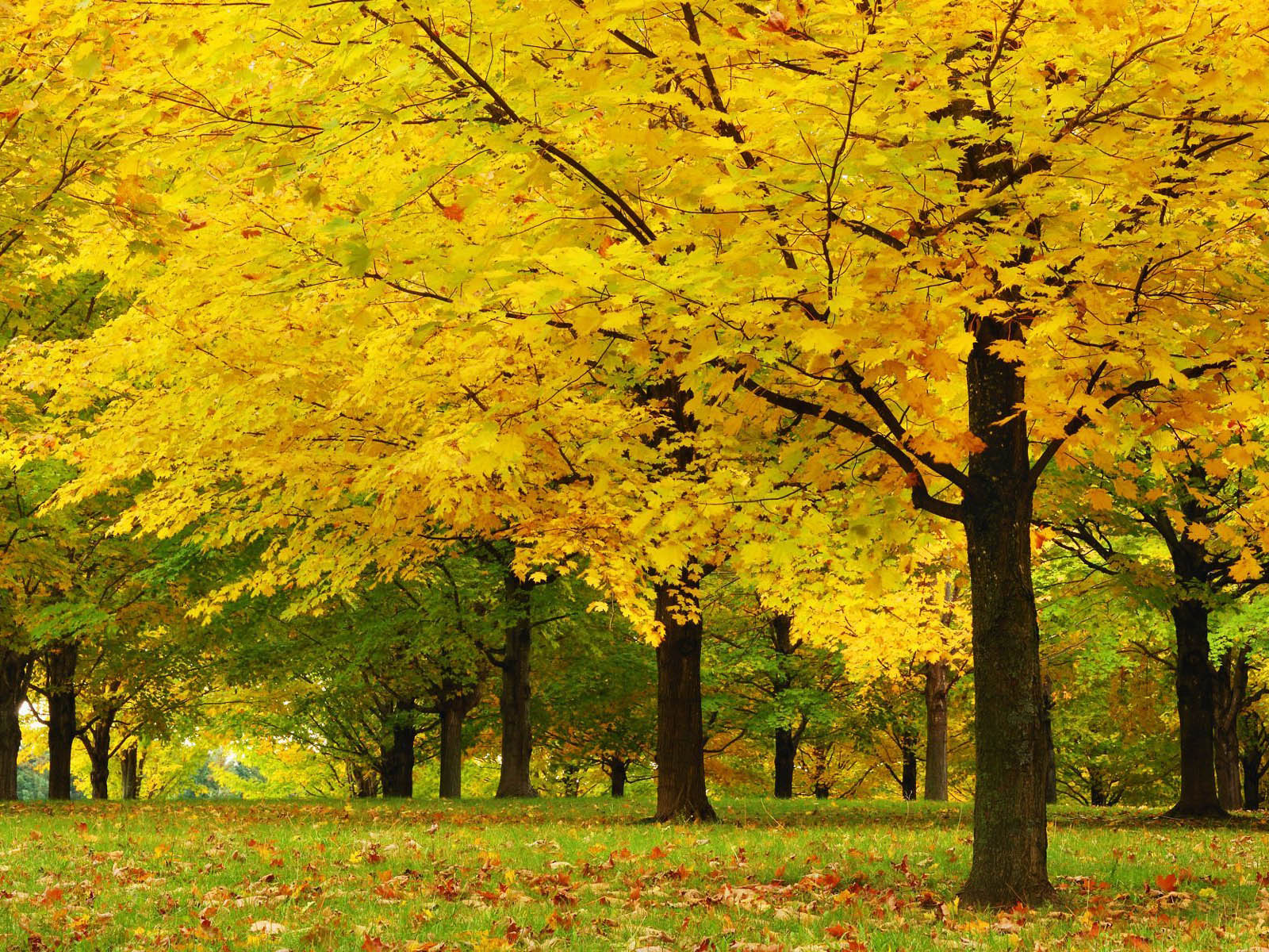 wallpapers: Trees Wallpapers
