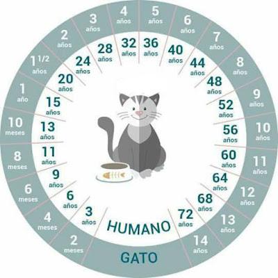 Cómo calcular la edad de un gato