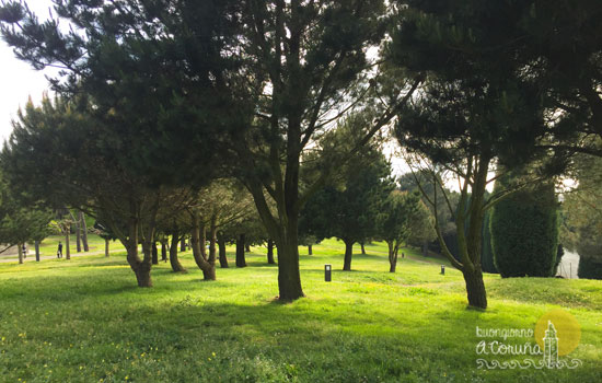 Alberi al parco di Monticaño