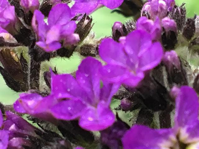 W szklarni z kwiatami - poszukujac raju