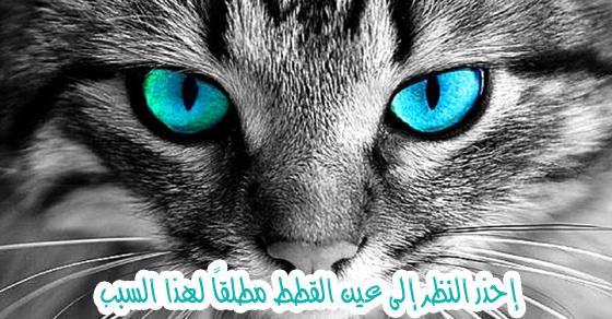 ما الذي سيحدث لك إذا أطلت النظر في عيني القطة ؟ إليك الإجابة علمياً