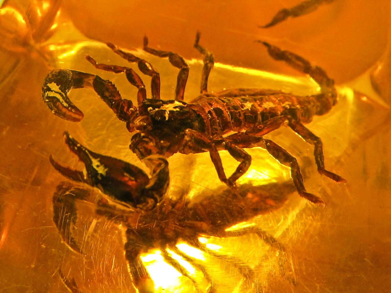 Jad skorpiona, czyli dlaczego warto posłuchać pytania do końca