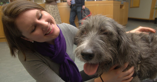 Can Therapy Dogs Help Students Handle Stress?