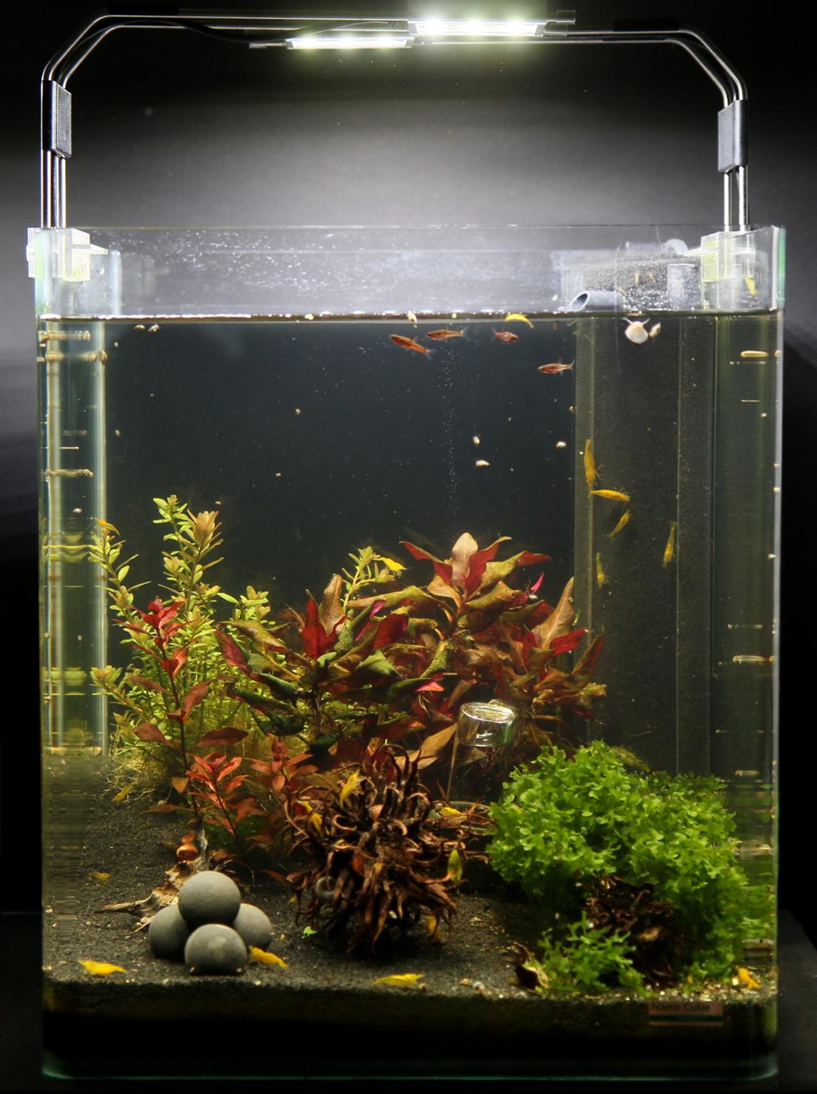 nano aquarium f r anf nger dennerle nanocube complete led mit deponitmix. Black Bedroom Furniture Sets. Home Design Ideas