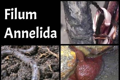 15 Ciri-Ciri Filum Annelida