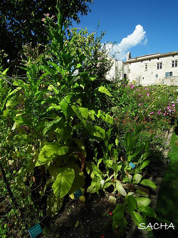 Un jour une photo blog photo les jardins du prieur de salagon mane alpes de haute - Les jardins de provence 77 ...