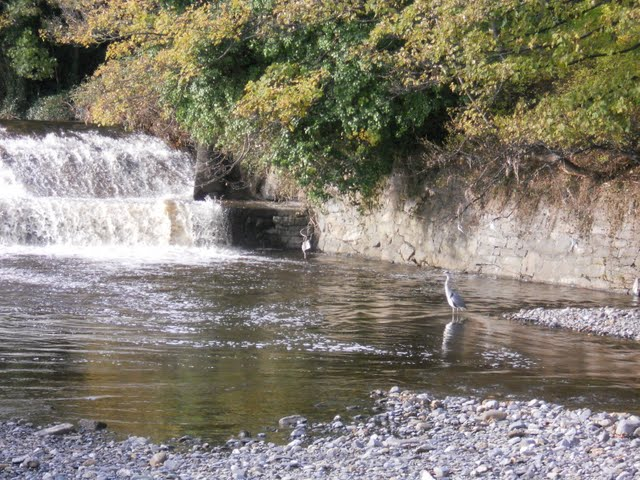 Walk the River Dodder in Dublin - waterfall and heron