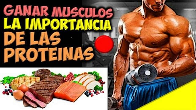 proteinas maternity estilizarse y acrecentar masa muscular