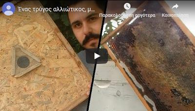 Τρύγος με βαλβίδα εκκένωσης: Video του Χρήστου Γαβριηλίδη