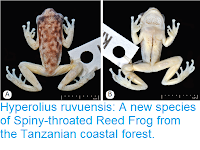 http://sciencythoughts.blogspot.co.uk/2017/05/hyperolius-ruvuensis-new-species-of.html