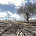 ZPP Meio Ambiente - Por que pesquisadores estrangeiros estão preocupados com a conservação ambiental no Brasil?