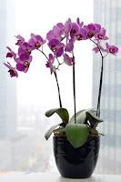 toko bunga anggrek