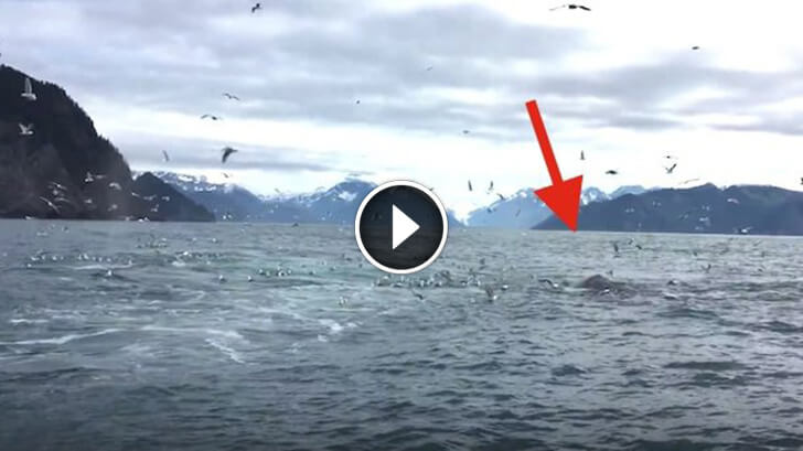 This Guy Was Filming Seagulls But He Did Not Expect What He Saw... It Will Take Your Breath Away!