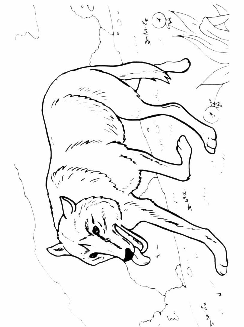 Disegni da colorare lupo for Foto per bambini da colorare