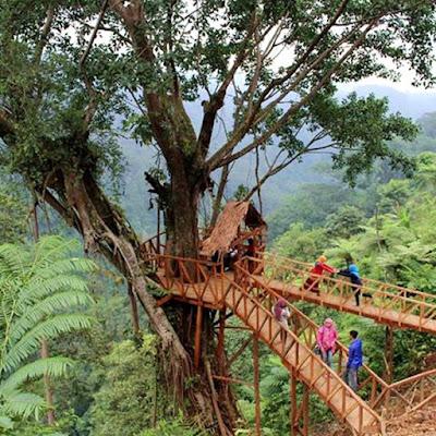 Rumah pohon bandar batang